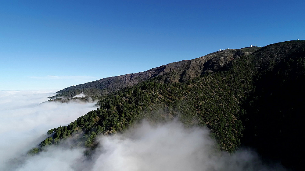 A mist covered forest near the astronomical observatories, UNESCO Biosphere Site, La Palma, Canary Islands, Spain, Atlantic, Europe