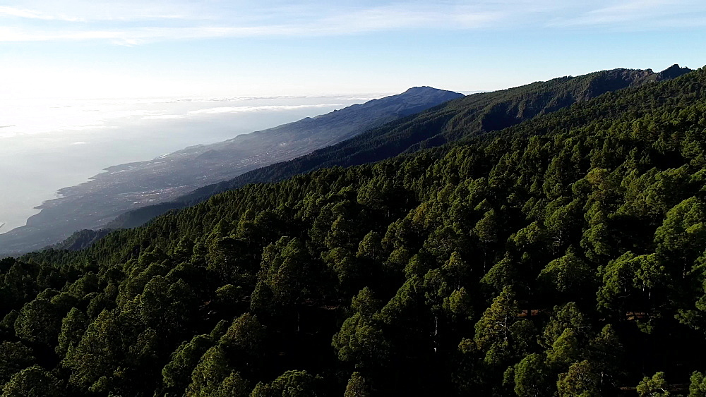 View of forest near National Park Caldera de Taburiente, UNESCO Biosphere Site, La Palma, Canary Islands, Spain, Atlantic, Europe