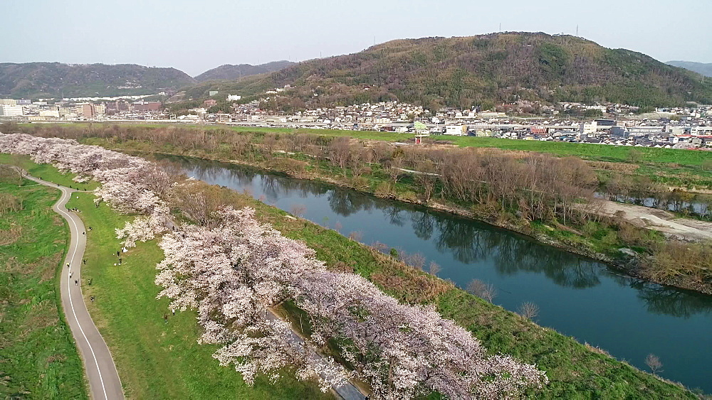 Cherry blossom at Sewaritei, Kyoto, Honshu, Japan, Asia - 733-8503