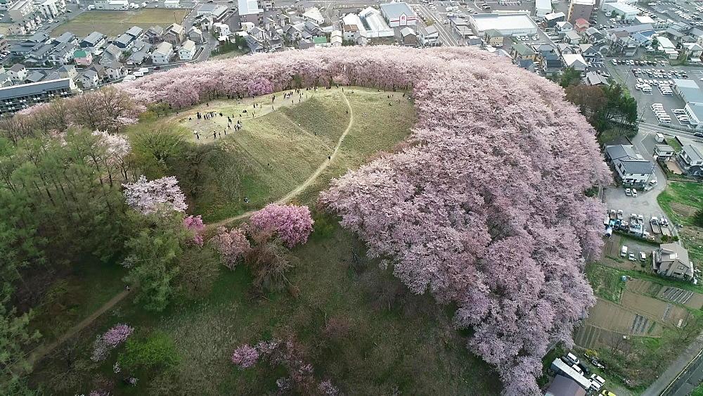 Cherry blossom at Koboyama, Matsumoto, Nagano Prefecture, Japan, Asia