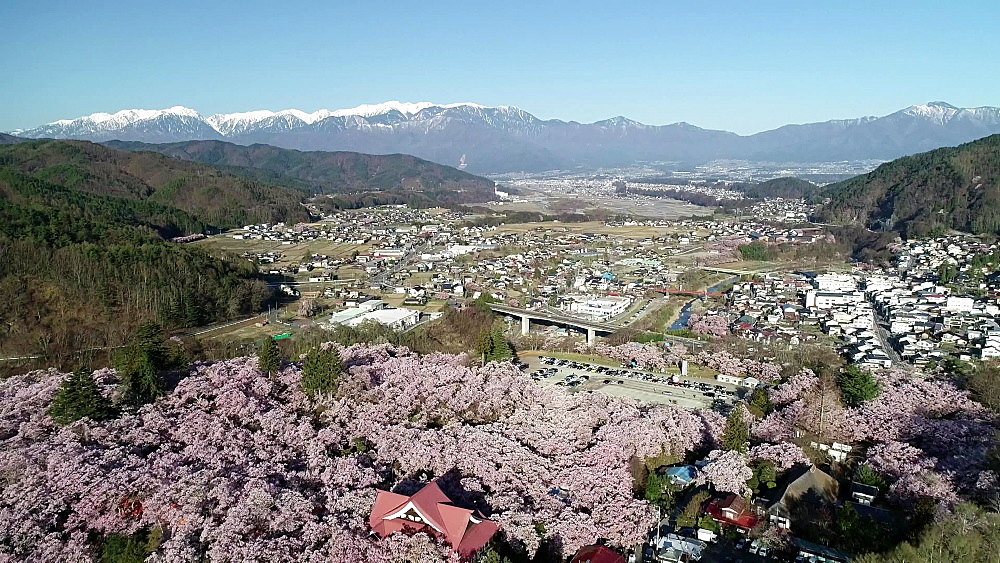 Cherry blossom at Takato jo Castle, Takato, Nagano Prefecture, Japan, Asia
