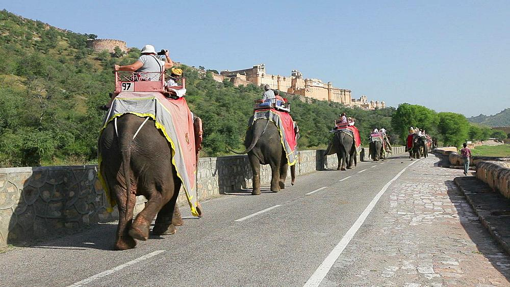 Elephants taking tourists to Amber Fort near Jaipur, Rajasthan, India, Asia