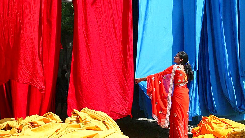 Woman in Saree checking the quality of freshly dyed fabric hanging from Bamboo poles to dry, Sari garment factory, Rajasthan, India, Asia, MR,PR
