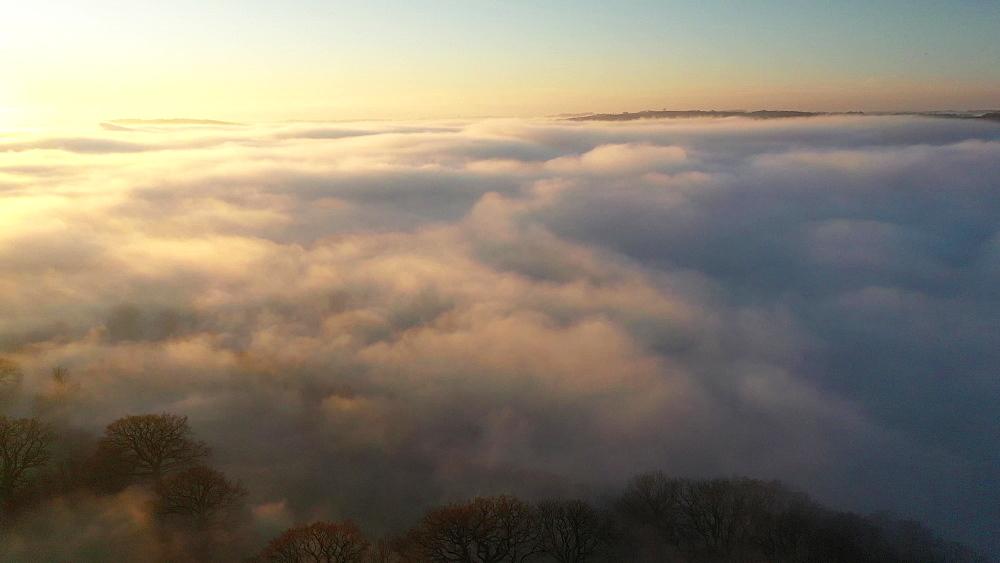 Aerial of fog over trees at sunset, Coldridge, Devon, England, United Kingdom, Europe
