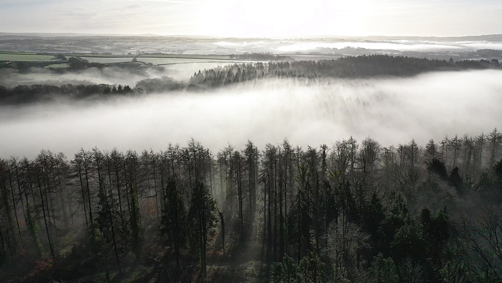 Aerial clip of mist through trees and countryside, Devon, England
