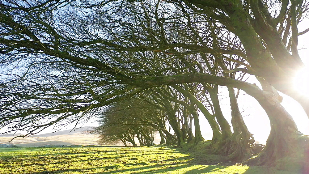 Footage of trees, sunlight and shadows, Dartmoor, Devon, England