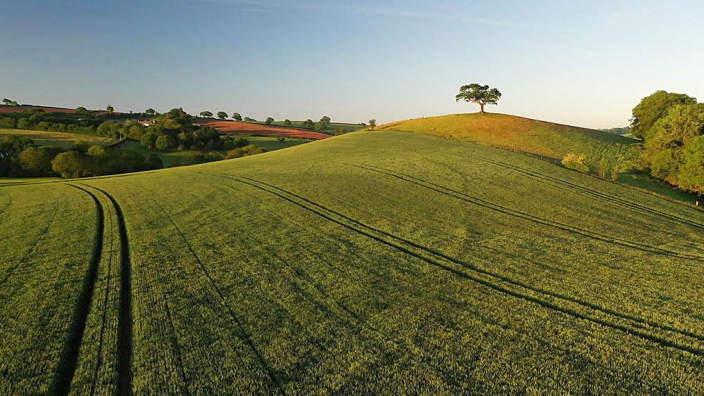 Aerial clip of rolling countryside and hilltop tree, Devon, England