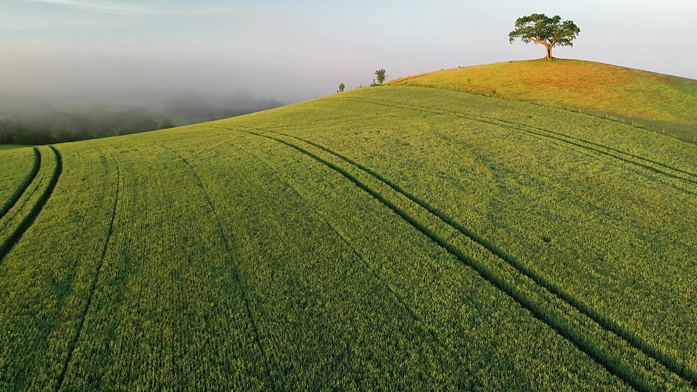 Aerial clip of rolling countryside and hilltop tree, Devon, England - 799-4079