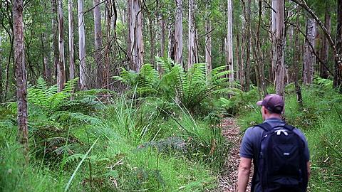 Man hiking in Great Otway National Park, Great Ocean Road, Victoria, Australia  - 800-2669
