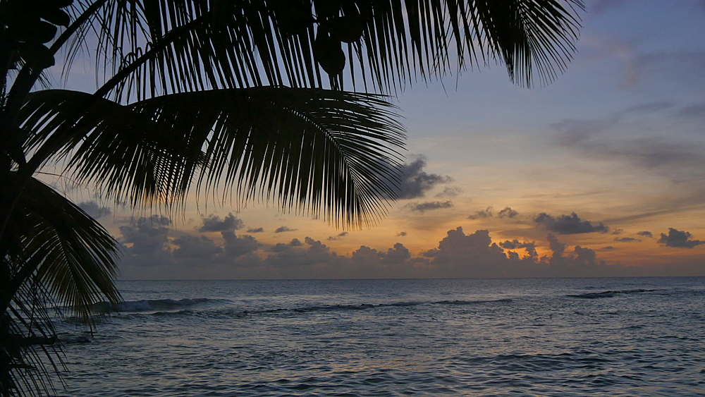 Palm Trees after sunset on Hastings Beach, Christ Church, Barbados, West Indies, Caribbean