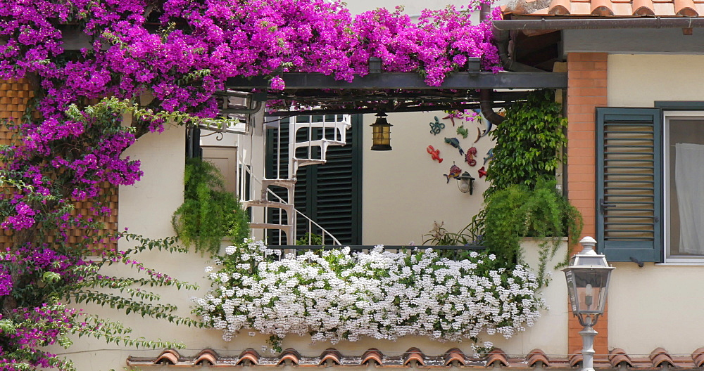 Flowers adorning window on Piazza Sant Antonino, Sorrento, Costiera Amalfitana (Amalfi Coast), UNESCO World Heritage Site, Campania, Italy, Europe - 844-12418