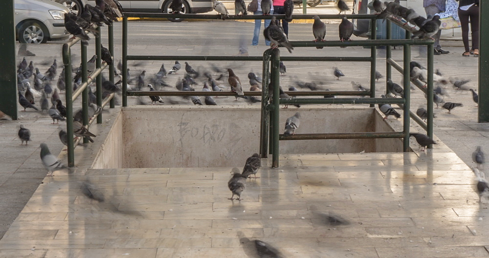 Time Lapse of pigeons in Kotzia Square, Athens, Greece, Europe - 844-14907