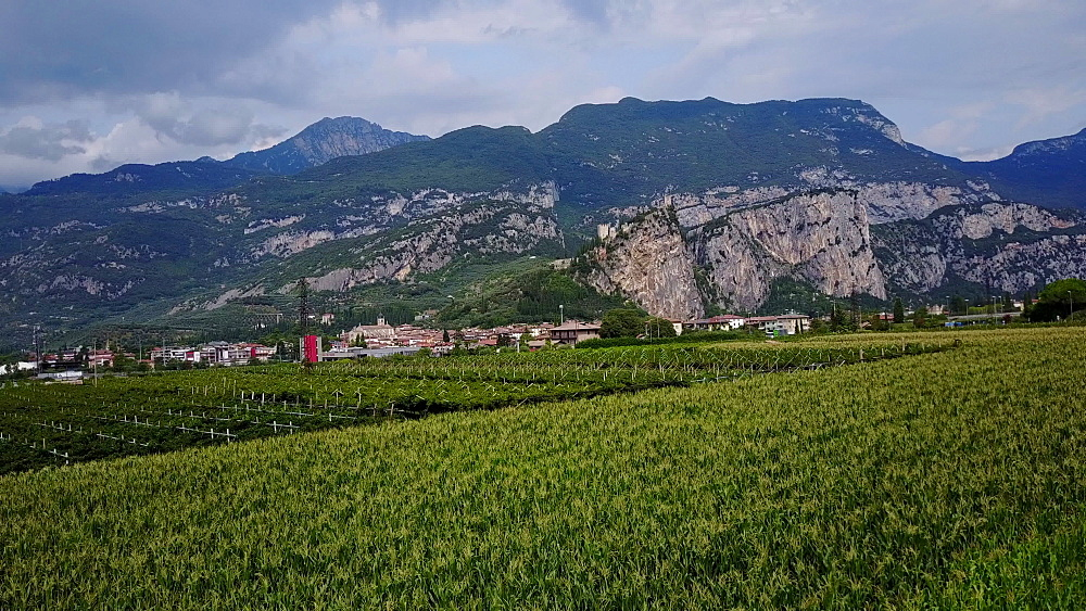 Aerial view of vineyards near Arco near Lake Garda, Trento, Italy, Europe - 844-14968