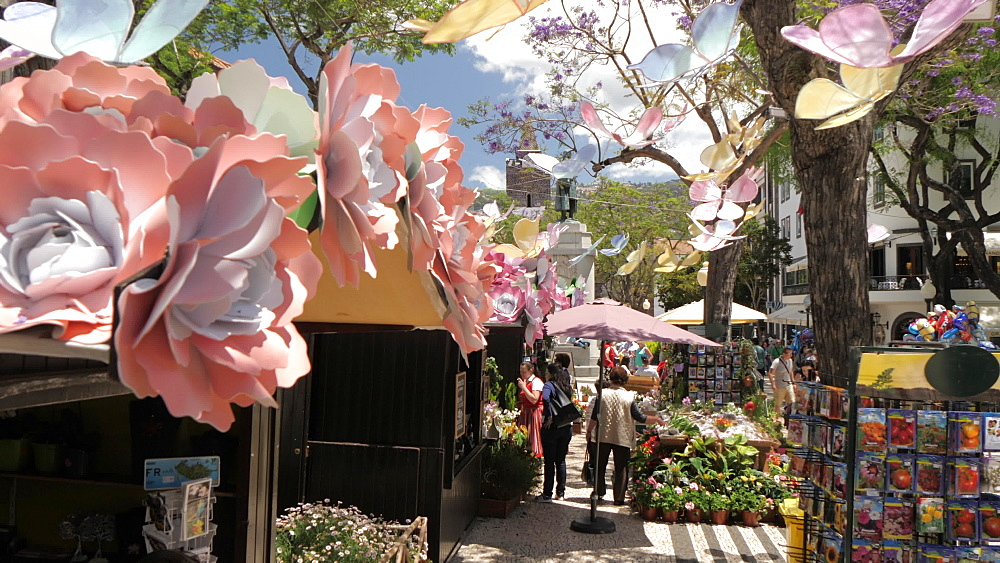 Guided shot of Flower Festival Market in old town of Funchal in spring, Madeira, Portugal, Atlantic, Europe