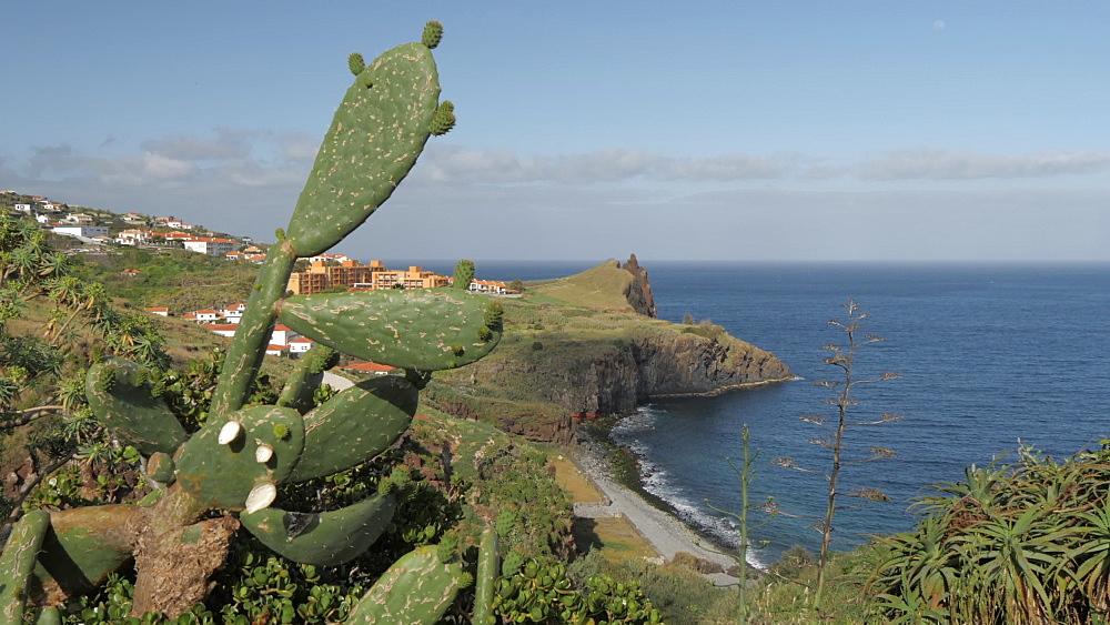 View of local flora and rocky coastline near Canico, Madeira, Portugal, Atlantic, Europe