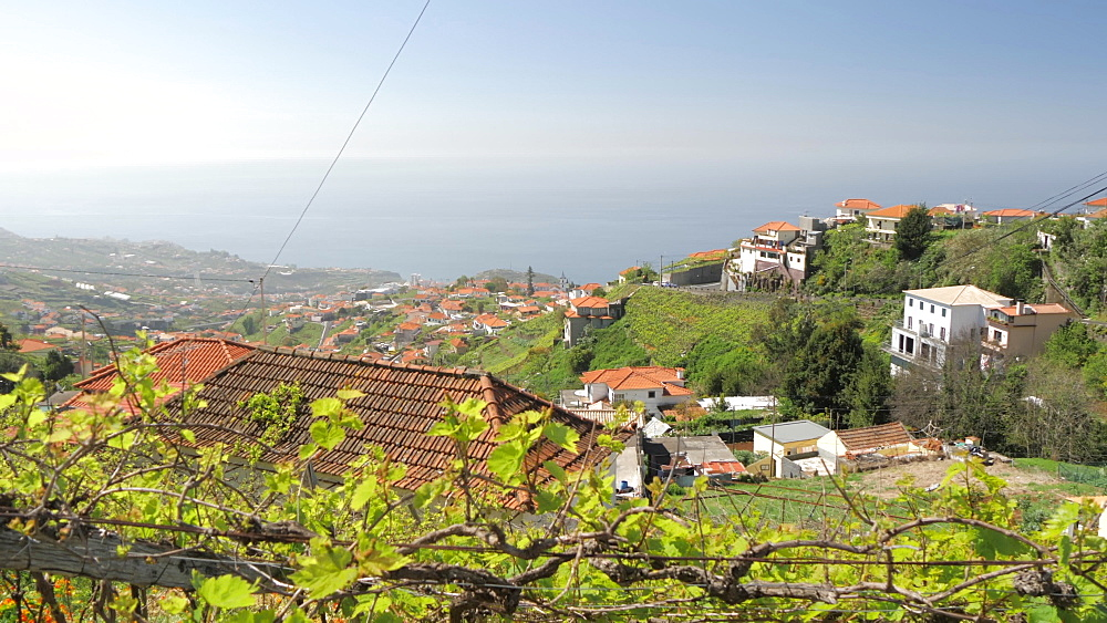 Vineyard and countryside near Cabo Girao, Atlantic Ocean visible in background, Madeira, Portugal, Atlantic, Europe - 844-16479