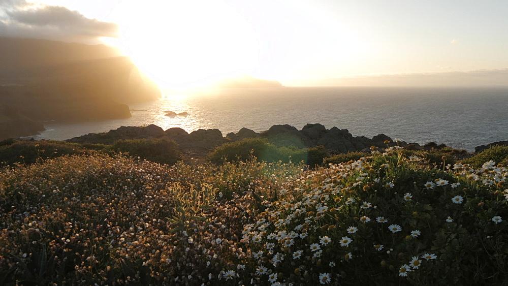 View of rocky coastline and flora at the Ponta da Sao Lourenco at sunset, Eastern tip of the island, Madeira, Portugal, Atlantic, Europe