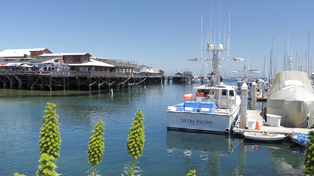 Fisherman's Wharf and boats in Monterey Harbour, Monterey Peninsula, California, United States of America, North America