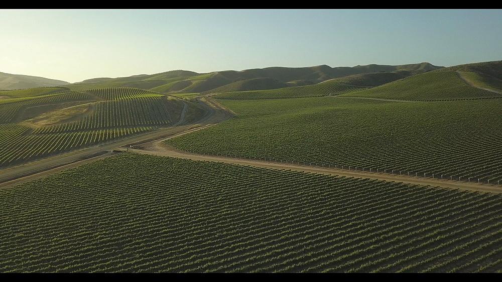 Flight over vineyards near Napa, Napa Valley, California, United States of America, North America