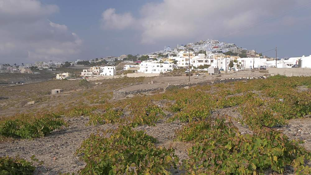 Panning shot of vineyards and Pyrgos Kallistis, Santorini, Greek Islands, Greece, Europe - 844-18100