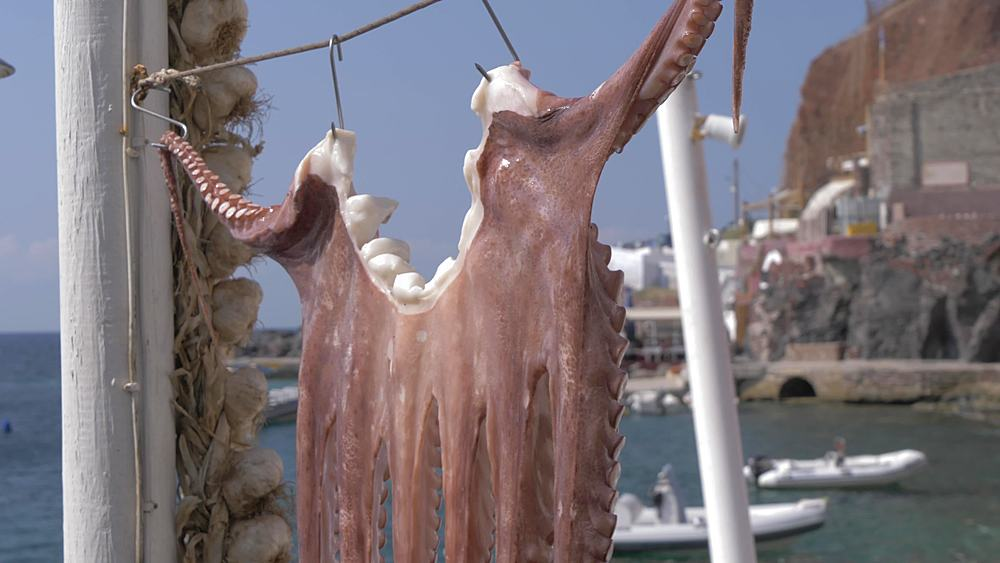 Octopuses hung up to dry in small harbour at Oia, Santorini, Cyclades, Greek Islands, Greece, Europe