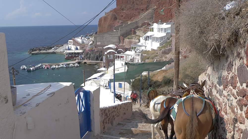 Donkey?s on path to small harbour at Oia, Santorini, Cyclades, Greek Islands, Greece, Europe