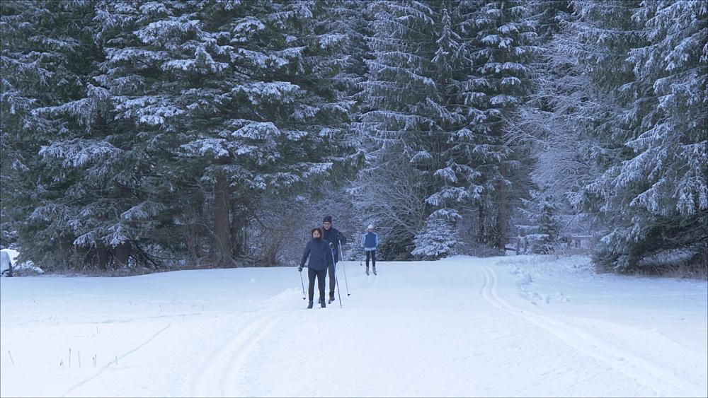 View of cross country skiers near Campitello di Fassa, Province of Trento, Trentino-Alto Adige/Sudtirol, Italy, Europe