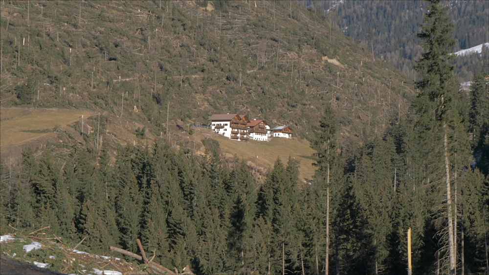 View of storm damaged forest at Carezza in winter, Province of Bolzano, South Tyrol, Italy, Europe