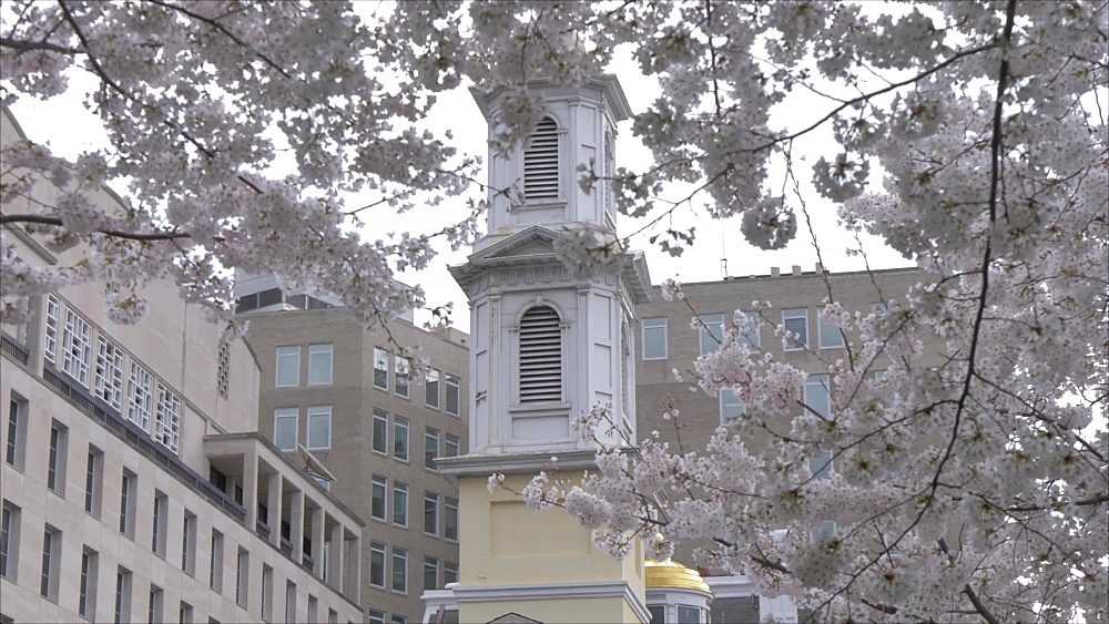 View of St John's Episcopal Church framed by spring blossom, Washington DC, District of Columbia, USA