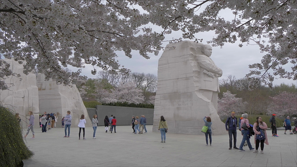 Martin Luther King Jr. Memorial and cherry blossom on overcast day, Washington DC, United States of America, North America