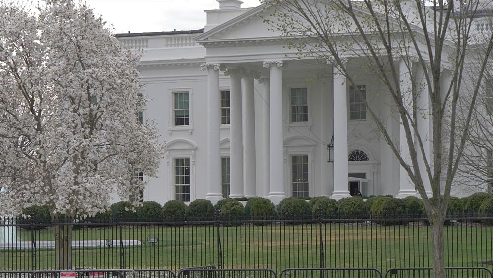 Pan shot of the White House and cherry blossom from Lafayette Square, Washington DC, District of Columbia, USA