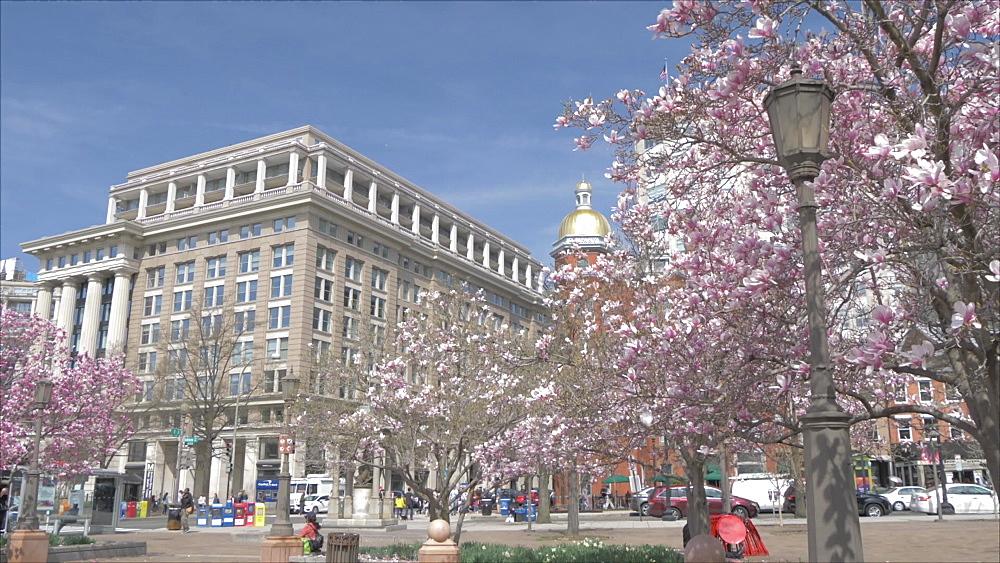 Pan shot of Indiana Plaza and spring blossom on Pennsylvania Avenue, Washington DC, District of Columbia, USA