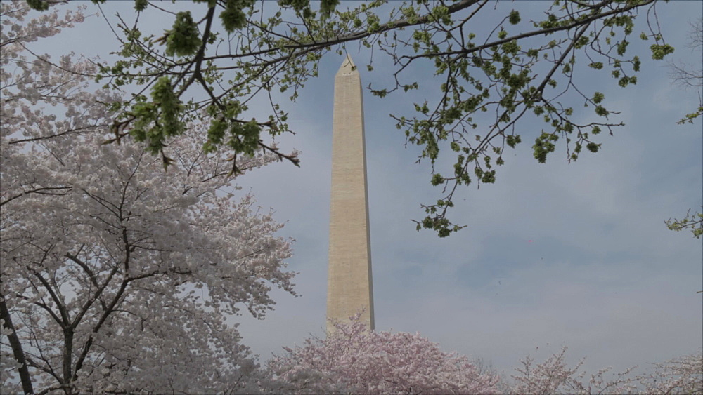 Pan shot of people, cherry blossom and Washington Monument, Washington DC, District of Columbia, USA