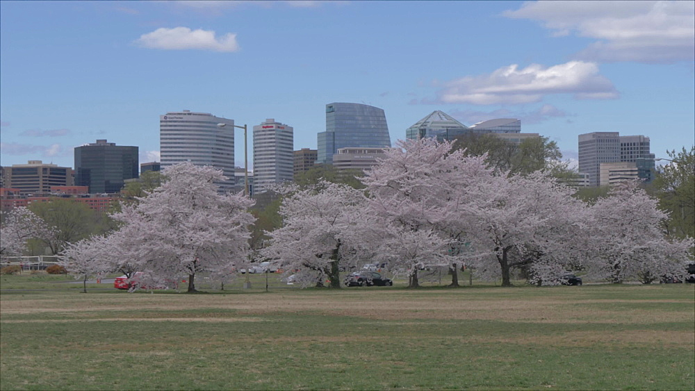 Pan shot of cherry blossom and North Rosslyn District from near Lincoln Memorial, Washington DC, United States of America, North America
