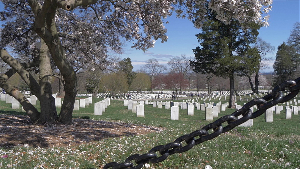Military grave stones in Arlington National Cemetery during springtime, Washington DC, United States of America, North America