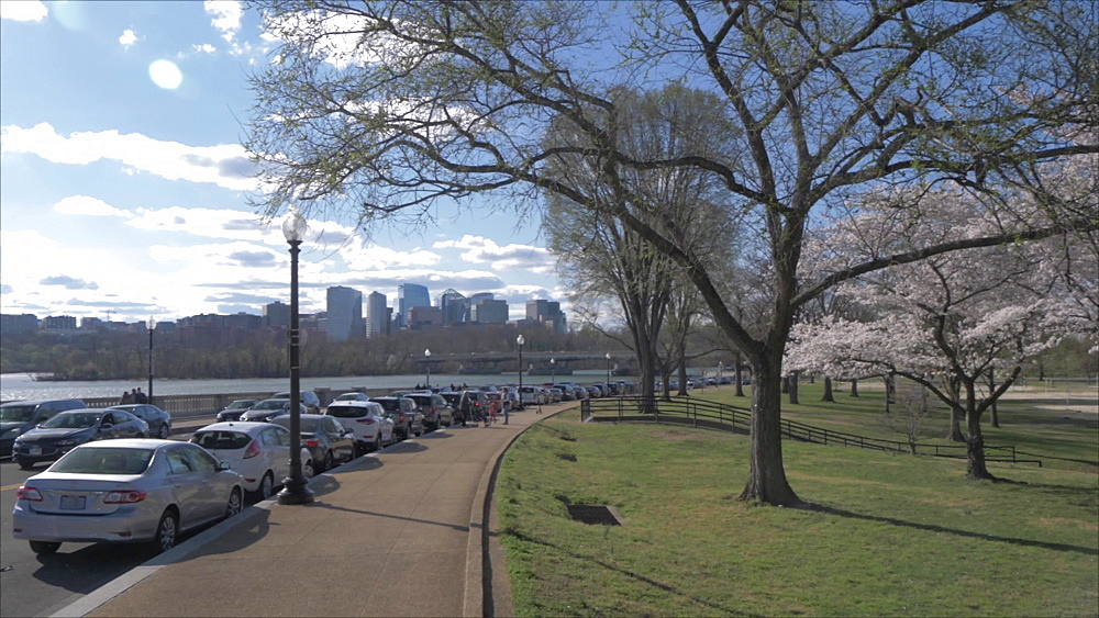 Crane shot of cherry blossom trees and view towards North Rosslyn District during springtime, Washington DC, District of Columbia, USA