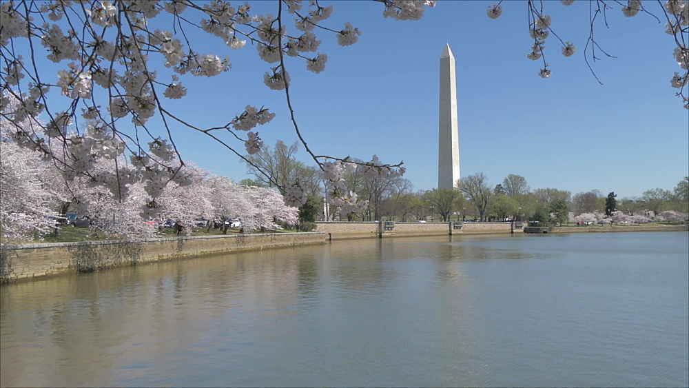 Crane shot of cherry blossom and Washington Monument reflecting in Tidal Basin, Washington DC, District of Columbia, USA, North America