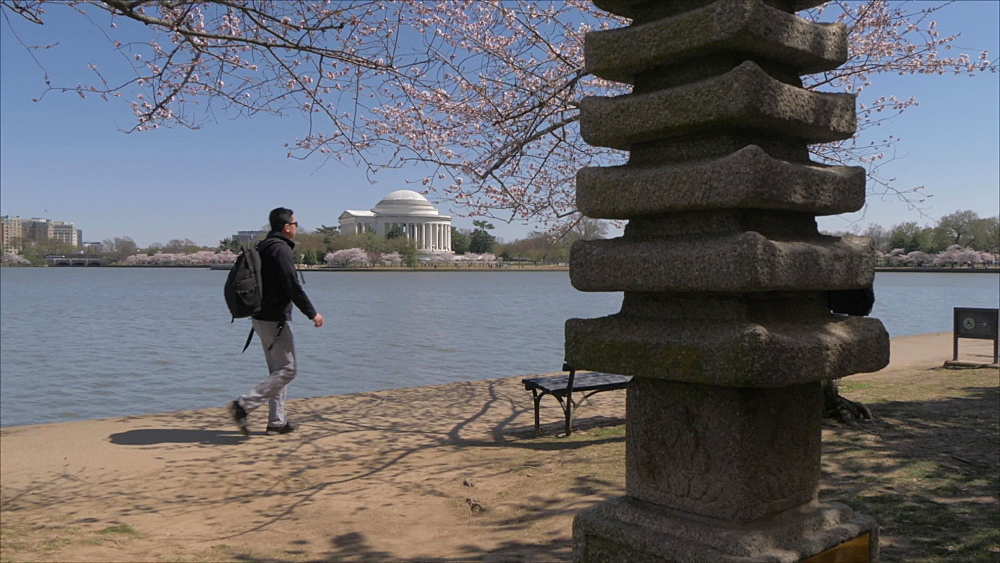 Crane shot of cherry blossom trees, Japanese Pagoda and Thomas Jefferson Memorial, Washington DC, District of Columbia, USA, North America