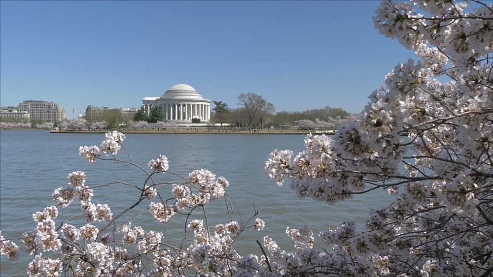 Crane shot of cherry blossom trees and Thomas Jefferson Memorial, Washington DC, District of Columbia, USA, North America