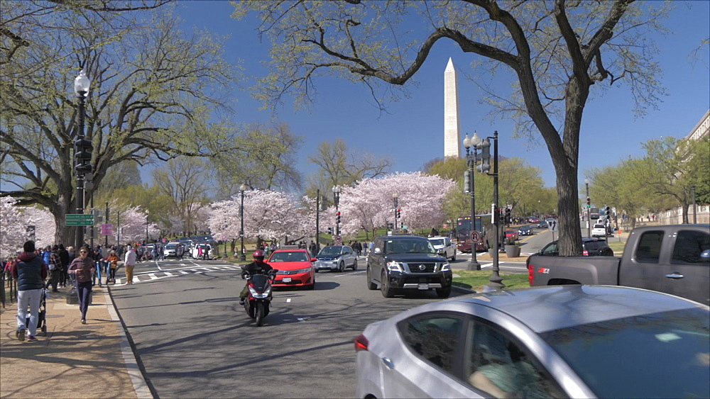 Pan shot of traffic, cherry blossom trees and Washington Monument, Washington DC, District of Columbia, USA, North America