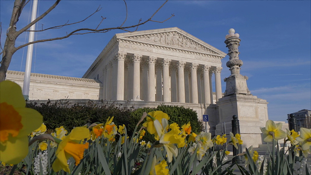 Slider shot of daffodils and Supreme Court of the United States, Washington DC, District of Columbia, USA, North America