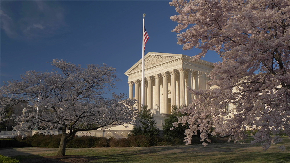 Crane shot of cherry blossom trees and Supreme Court of the United States, Washington DC, District of Columbia, USA, North America