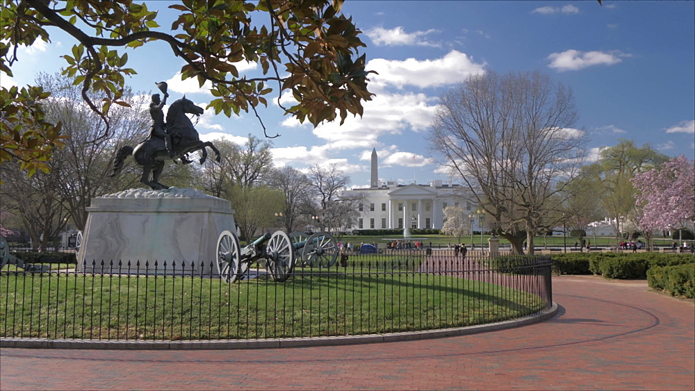 Shot from Lafayette Square of White House and cherry blossom, Washington DC, United States of America, North America