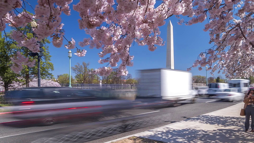 Time lapse of people, traffic and cherry blossom with Washington Monument, Washington DC, United States of America, North America