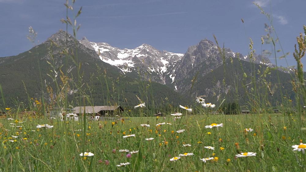 Mountains and meadows near Ulrich am Pillersee, Austrian Alps, Tyrol, Austria, Europe