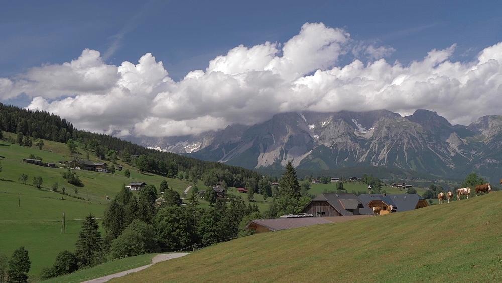 Traditional houses, cattle and landscape near Gfoller, Styria, Austrian Alps, Austria, Europe