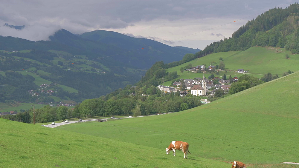 Grazing cattle, busy road and the town of Grobming, Styria, Austrian Alps, Austria, Europe