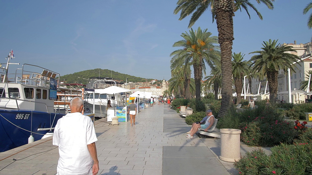 Boats, palm trees and promenade, Split, Dalmatian Coast, Croatia, Europe