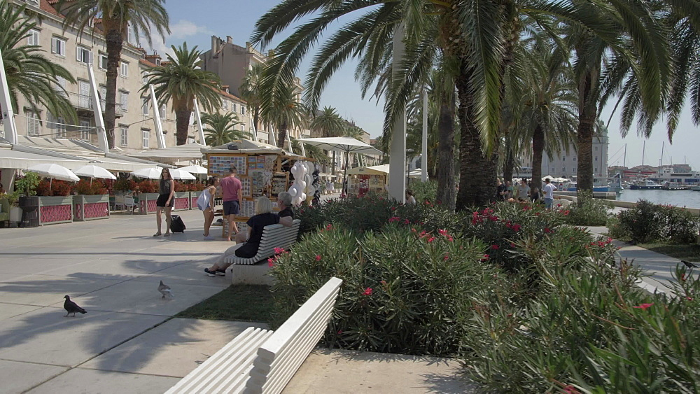 Palm trees, buildings and cafes on the Promenade, Split, Dalmatian Coast, Croatia, Europe