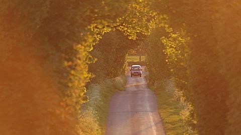 Country Lane at Sunset, Matlock, Derbyshire, England, UK, Europe